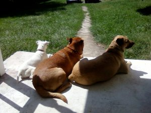 front porch dogs